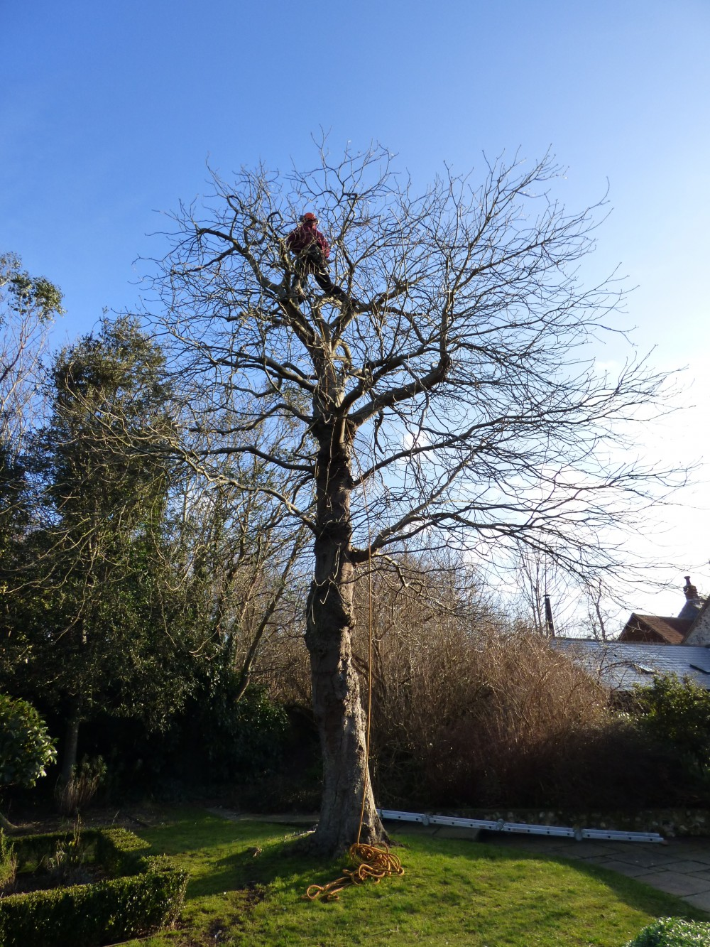 Tree surgeons and arborists in Brighton & Hove