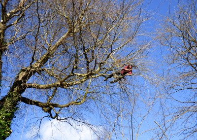 Tree felling and surgery with trained arborists